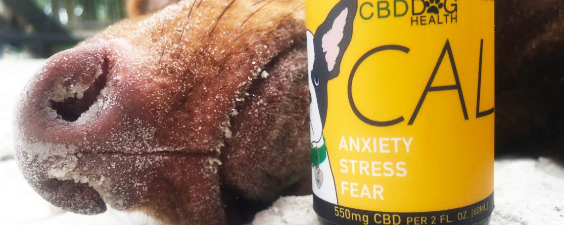 What Cbd Oil For Canines Professionals Do Not Want You To Know